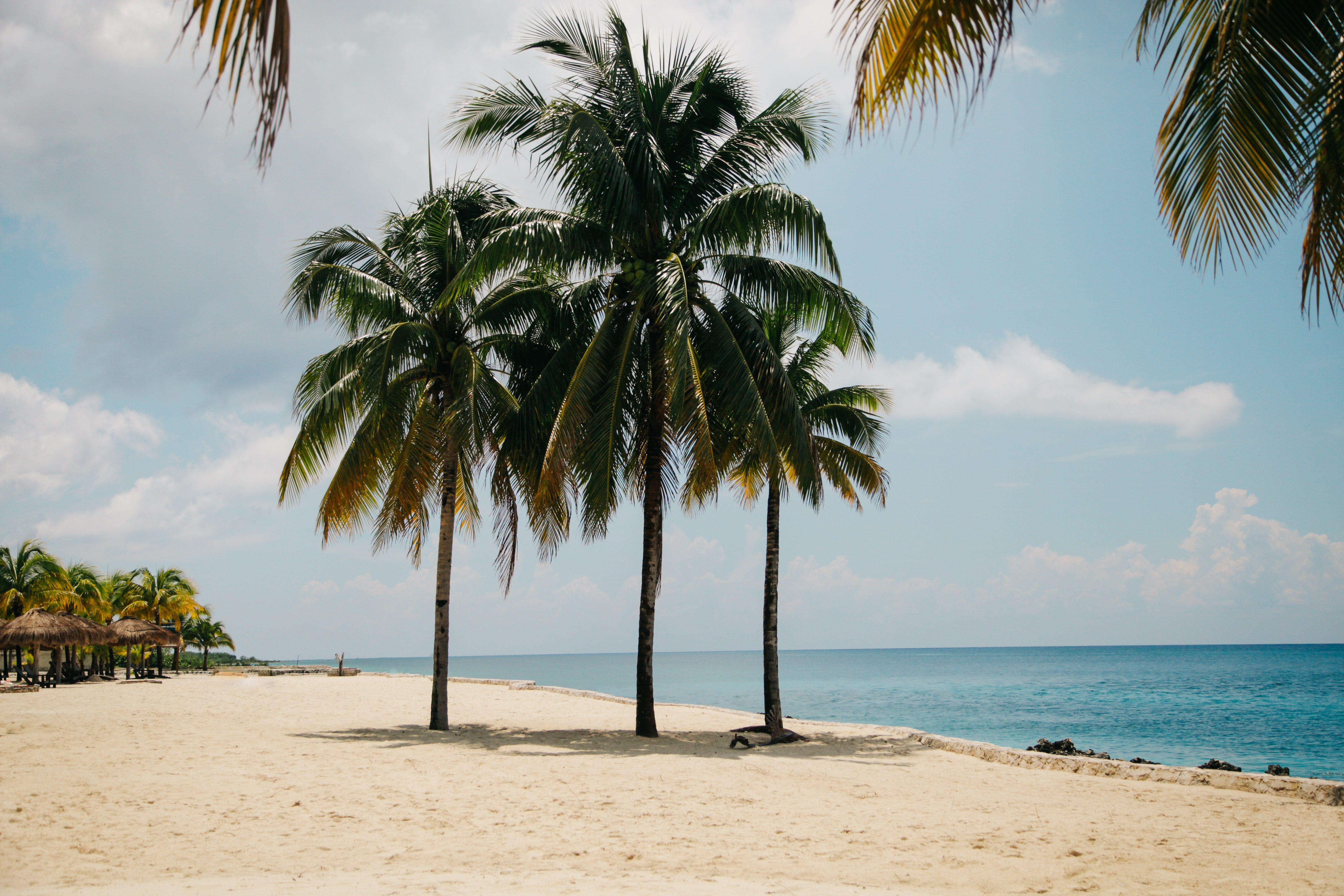 palm trees on beach on a sunny day